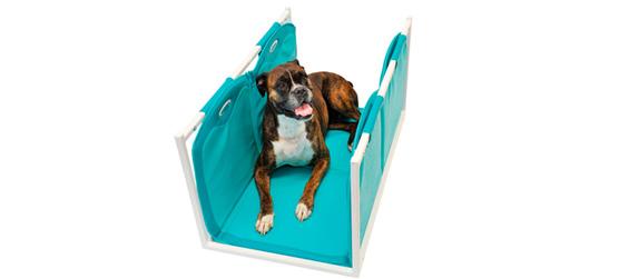 magnetoterapia uso veterinario