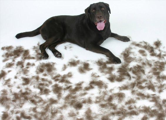 tratamientos veterinarios magnetoterapia perdida pelaje