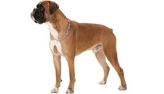 Tratamientos veterinarios magnetoterapia displasia articulaciones