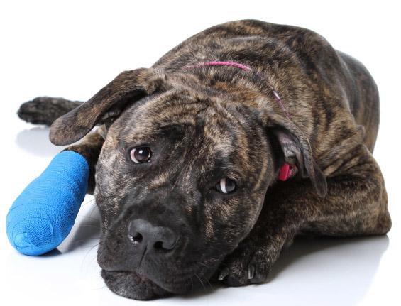 tratamientos veterinarios magnetoterapia cicatrizacion heridas