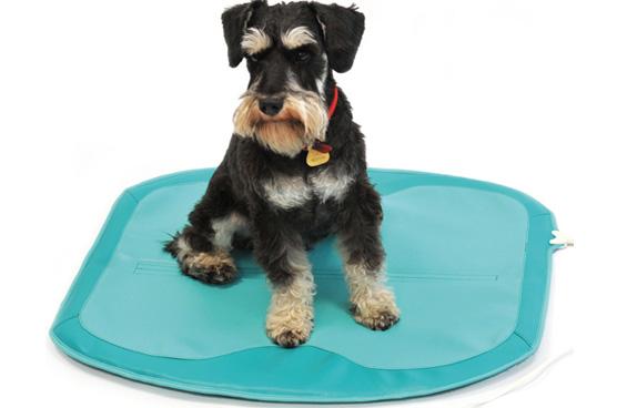tratamientos veterinarios magnetoterapia tratamiento fracturas