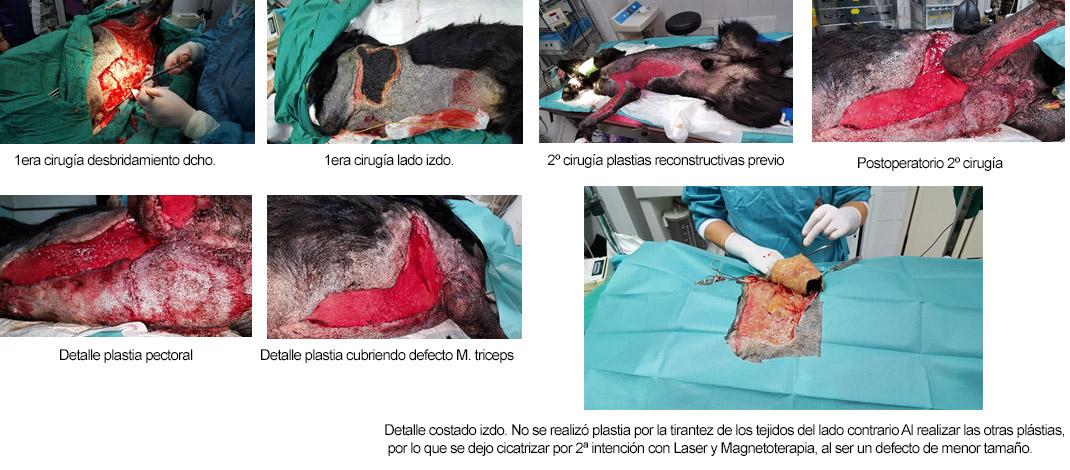 caso clinico logan