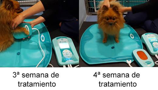 casos clinicos magnetoterapia veterinaria