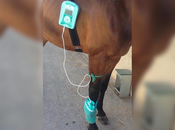 caso clinico caballo hannoveriano