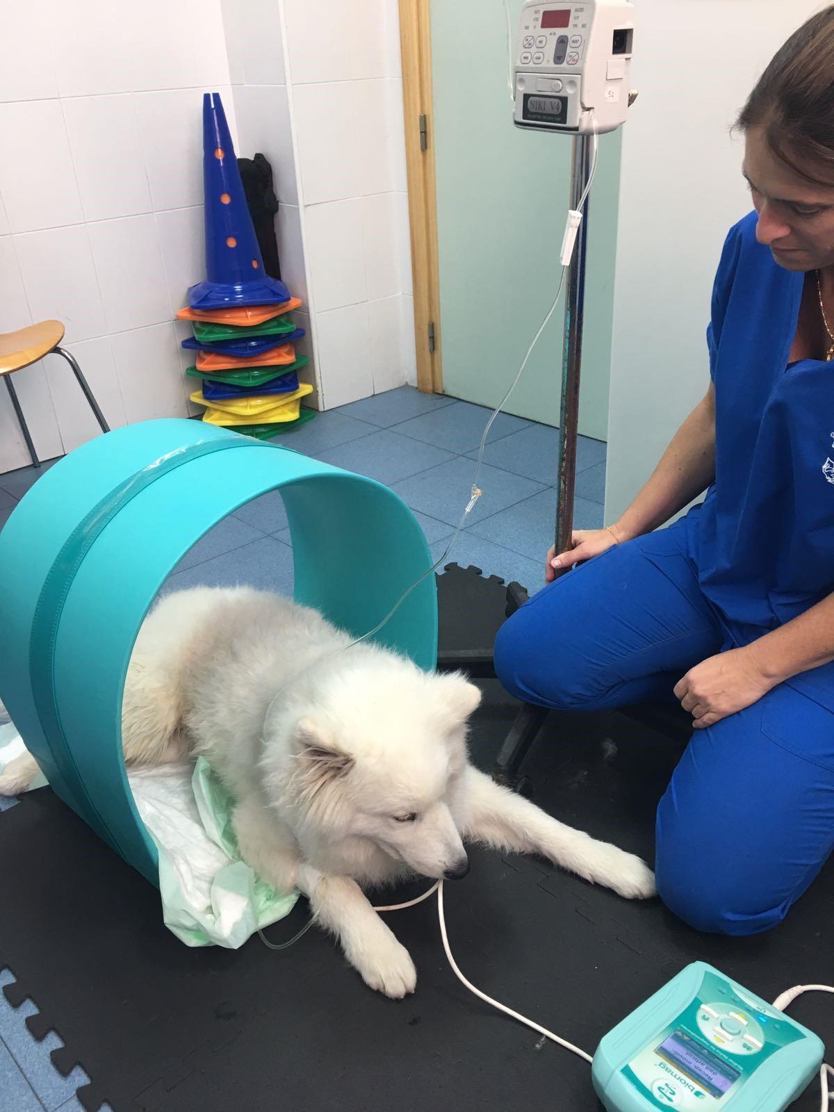 joy magnetoterapia veterinaria caso clinico