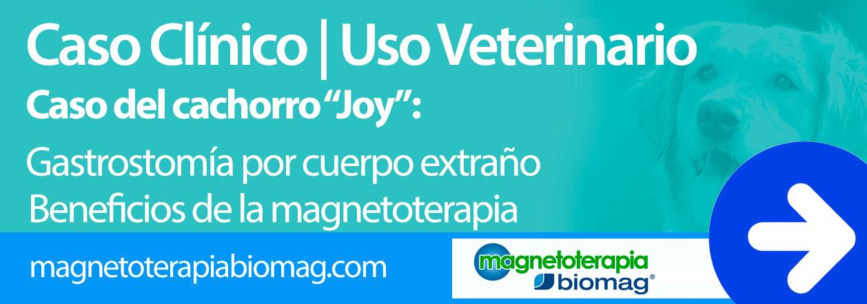 Magnetoterapia Veterinaria biomag