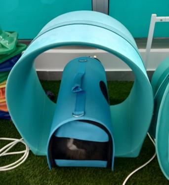 Magnetoterapia epilepsia felina