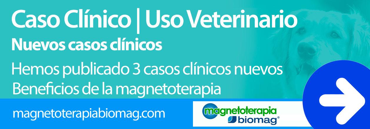 magnetoterapia veterinaria postoperatorio gordon max