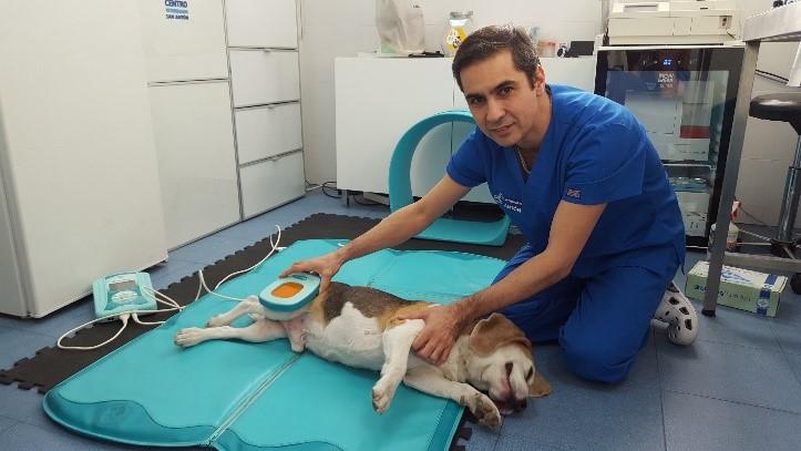 magnetoterapia veterinaria luxacion rotula