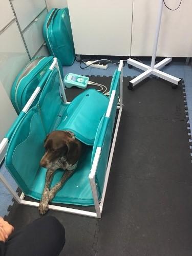 magnetoterapia veterinaria neuropraxia