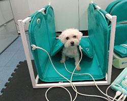 lana magnetoterapia veterinaria
