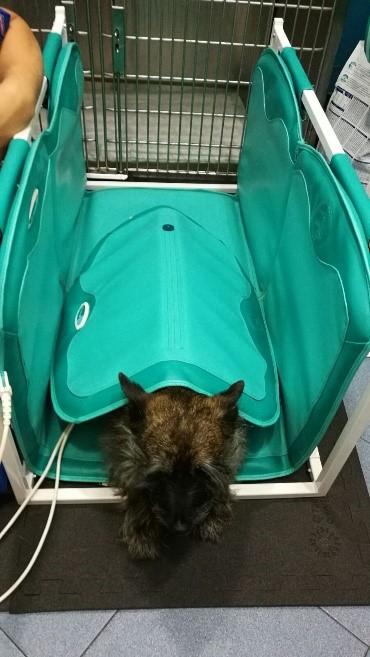 Mico magnetoterapia veterinaria