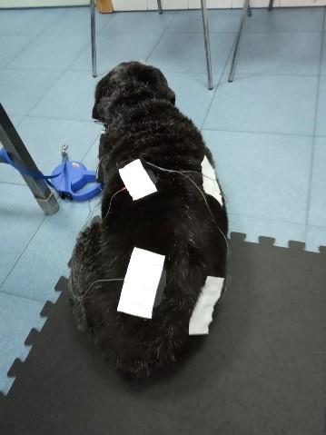 Tuko magnetoterapia veterinaria